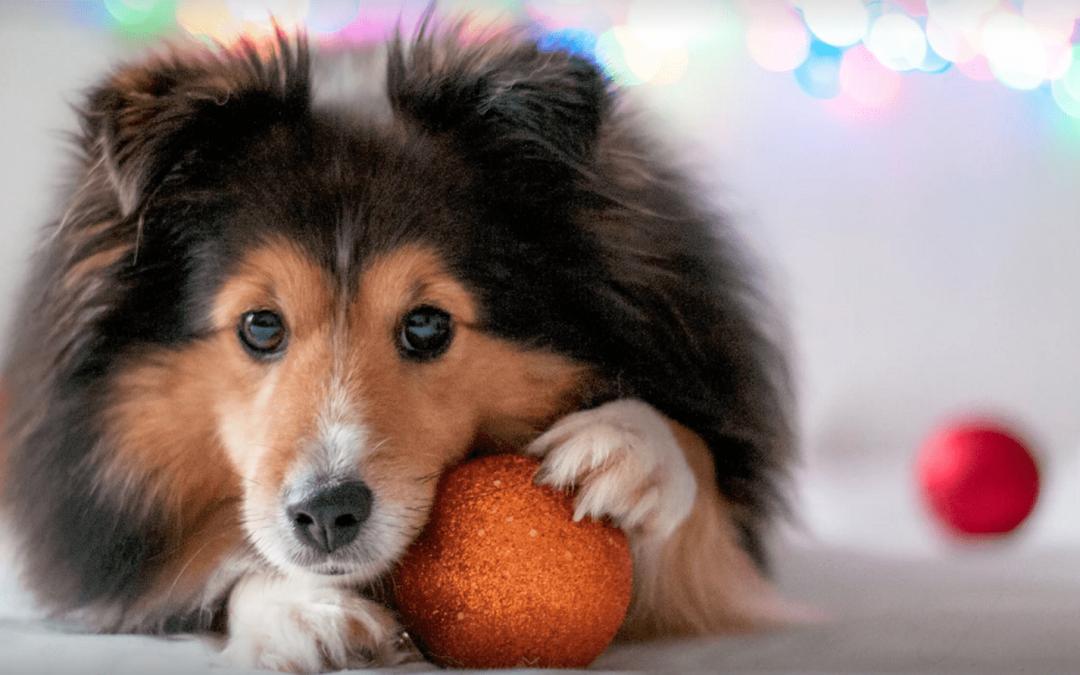 Muestras gratis para perros Royal Canin