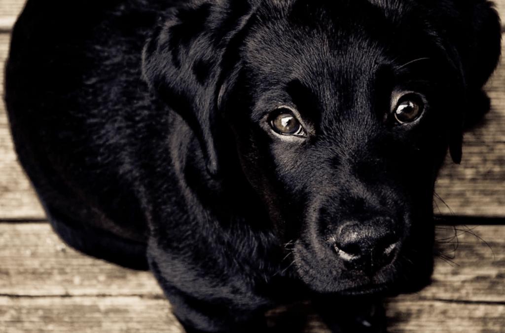 ¿Cuál es la mejor comida para perros?