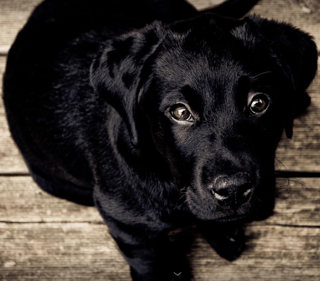 Cu l es la mejor comida para perros muestras a casa - Cual es el mejor ambientador para casa ...
