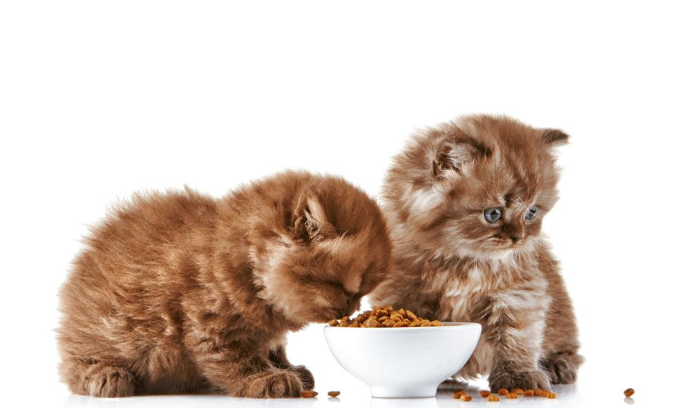 ¿Cómo elegir la mejor comida para gatos?