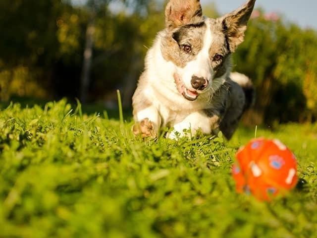 Consejos para perros en adopción