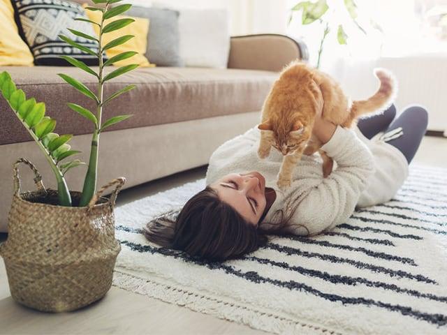 Los beneficios de tener un gato en casa