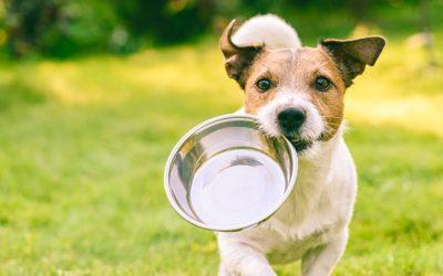 ¿Por qué elegir Affinity pienso para perros?