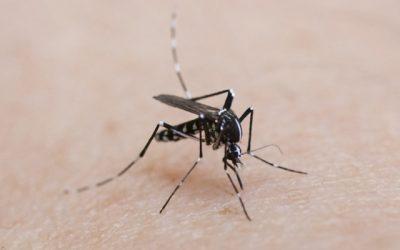 Cómo prevenir la picadura del mosquito tigre